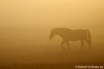 Siklienka mladsi - V rannej hmle-3