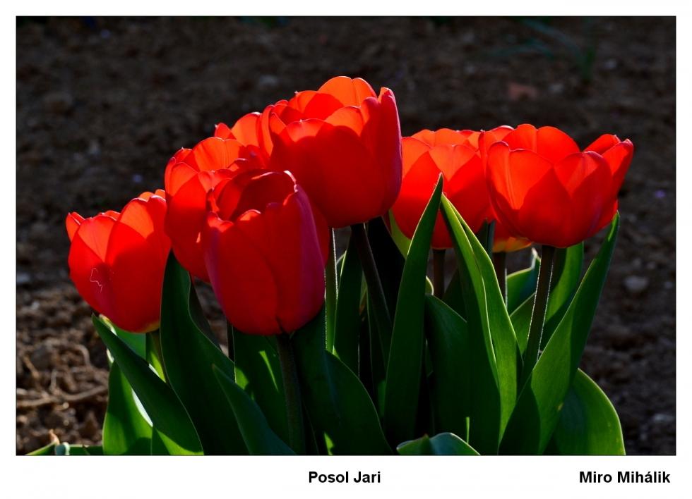 Mihalik-Posol-jari-1