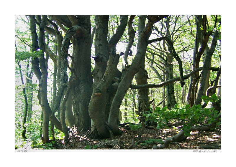 stromy-tribec