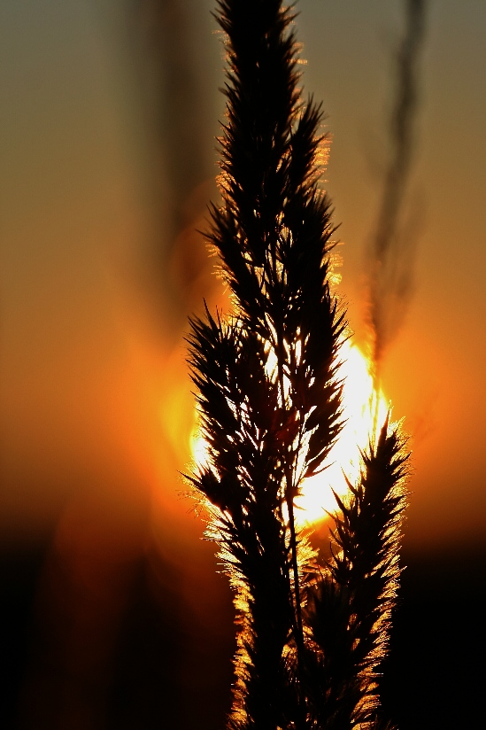 slnko-v-trave
