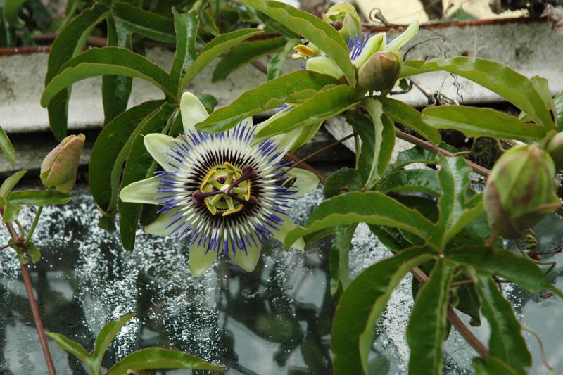kvety v Topolciankach