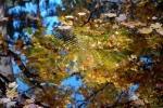 motyl v jazierku