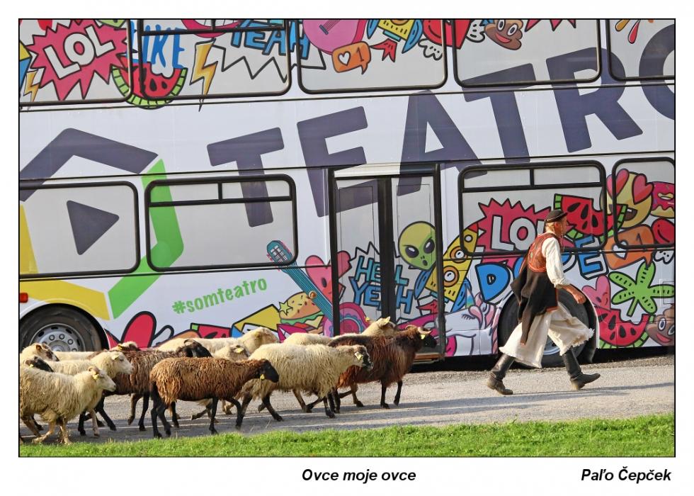 Cepcek-Ovce-moje-ovce
