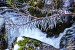 Palo-Cepcek_V zimnom kralovstve