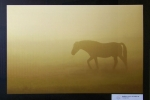 radimir-siklienka-v-rannej-hmle