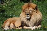 zoo-lesna-285