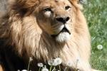 zoo-lesna-304