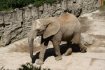 zoo-lesna-655