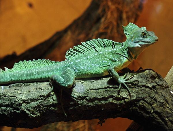 zoo-lesna-037