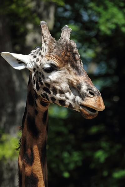 zoo-lesna-162