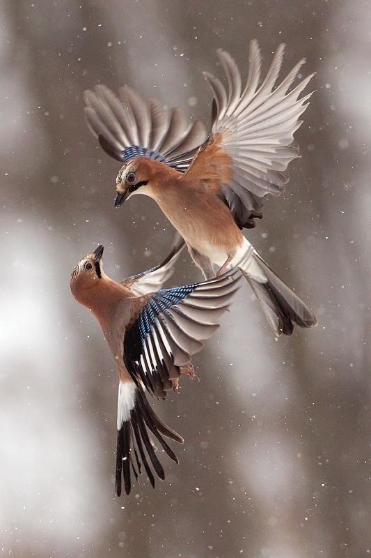 Vzdušný tanec - autor: R. Siklienka
